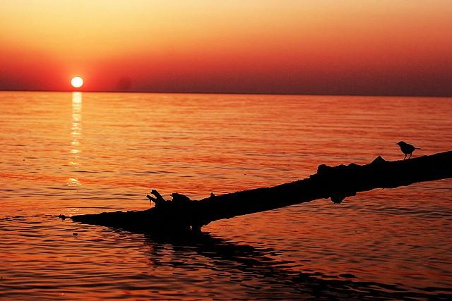 киевское море рассвет